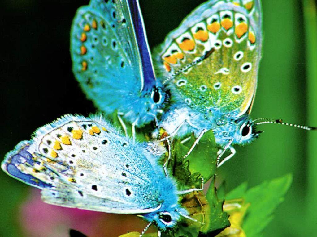 Pretty Butterfly Backgrounds - Wallpaper Cave