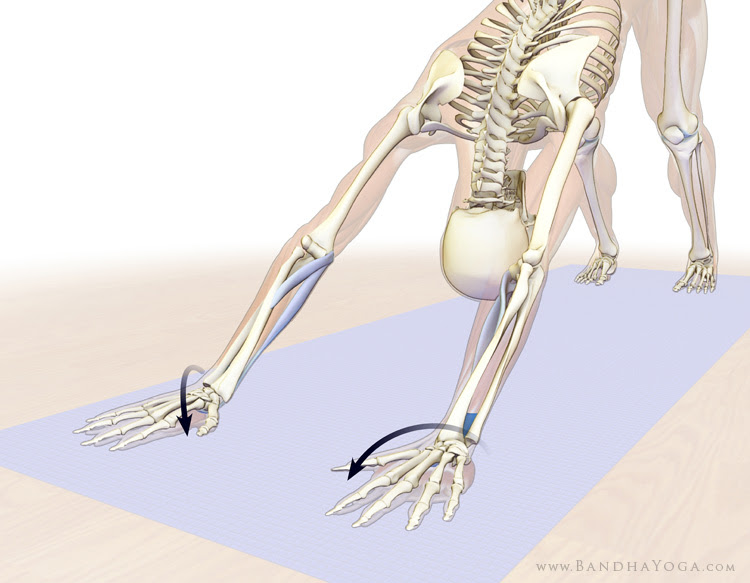 pronating the forearms in downward facing dog pose