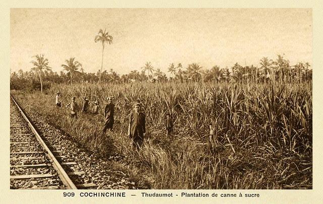 Thudaumot - Plantation de Canne à Sucre et voie de chemin de fer - 1946