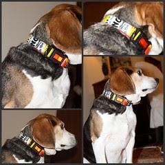 Daisy Dingo Collar