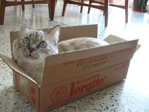 Camille en caja