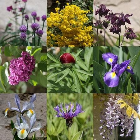 Chroniques de jardin mai 2010
