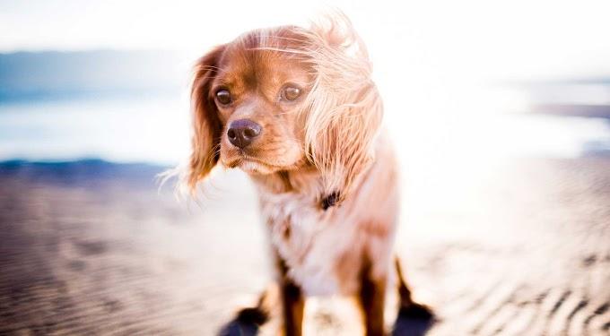 Golpes de calor en perros: Cómo identificarlos y evitarlos