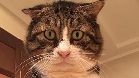 Kucing Lucu Sakit