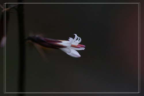 PICT4905