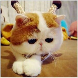 Unduh 89+  Gambar Kucing Yang Menggemaskan Terbaik Gratis