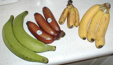 File:Bananavarieties.jpg