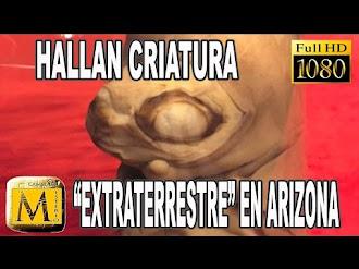 Encuentran Extraña Criatura 'Extraterrestre' En Arizona