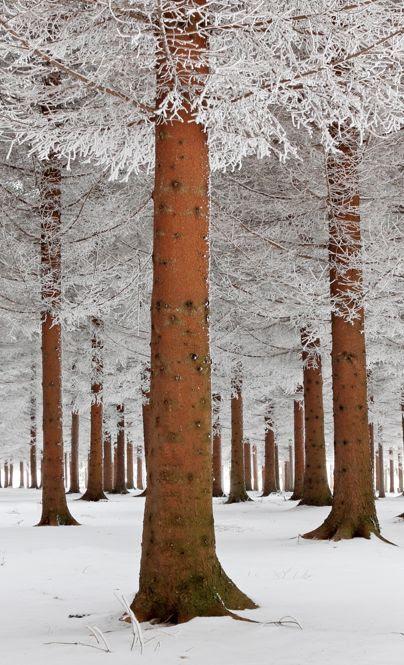 Magical forest in Sokobanja, Serbia