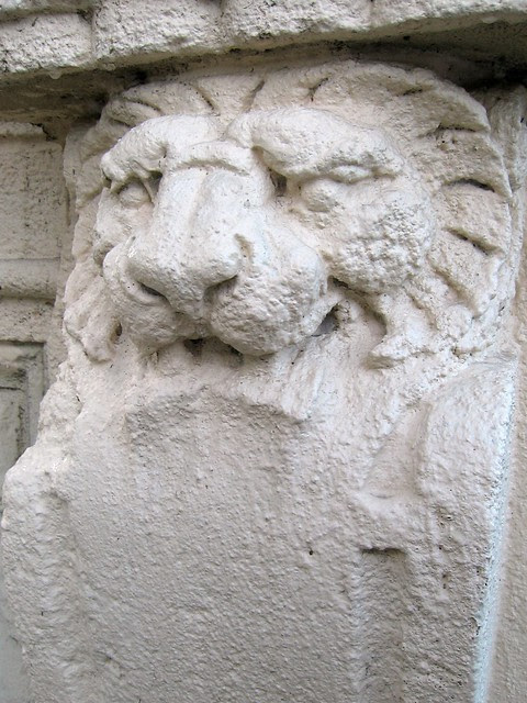 pfp_lion