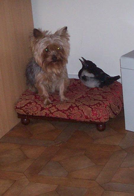 Alice et Piloue