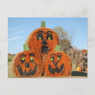 Three Big Pumpkins Postcard postcard