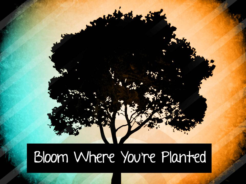 40 Keys To Blooming Where You Have Been Planted Todays Word