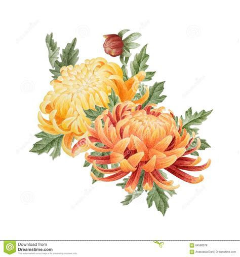 Watercolor Floral Bouquet Of Chrysanthemum Stock
