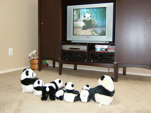 """The Panna Stuffies watch their favorite DVD, """"A Baby Panda's First Year..."""""""