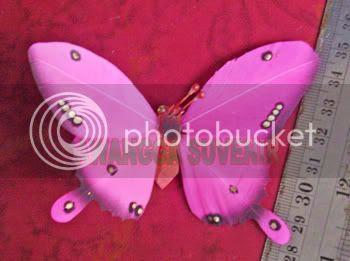 kupu-kupu sayap 2 besar