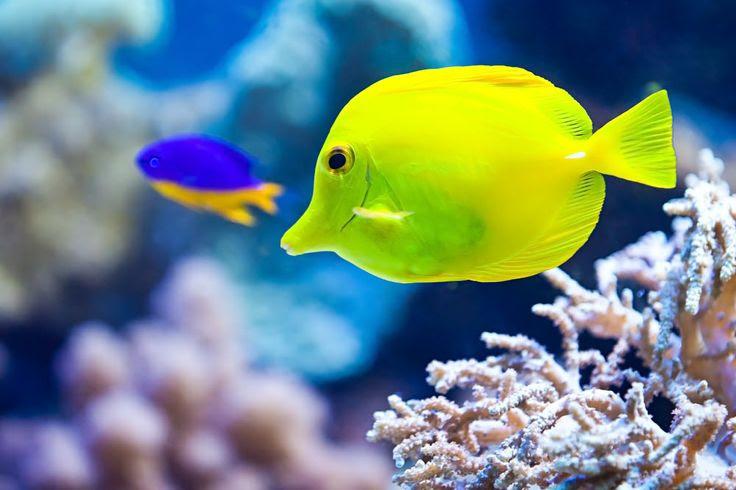 10 עובדות מסמרות שיער על דגים