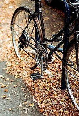 Fall leaves crunching underneath...