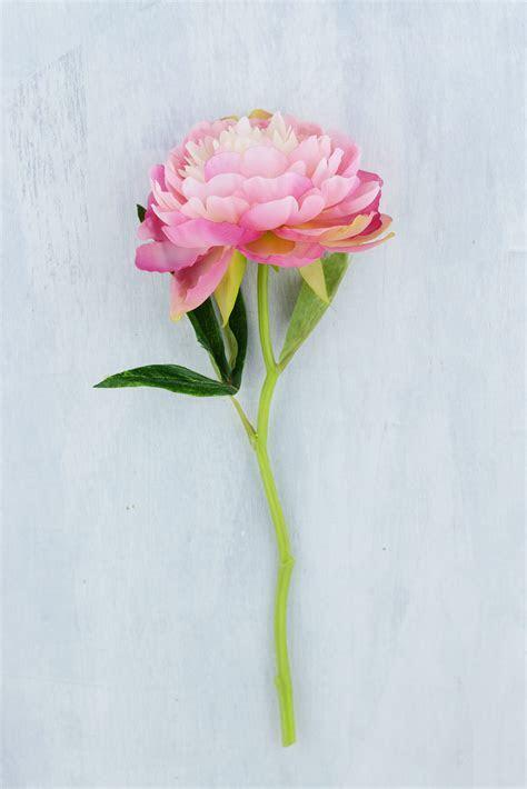 12 Pink & Mauve Peony Flowers