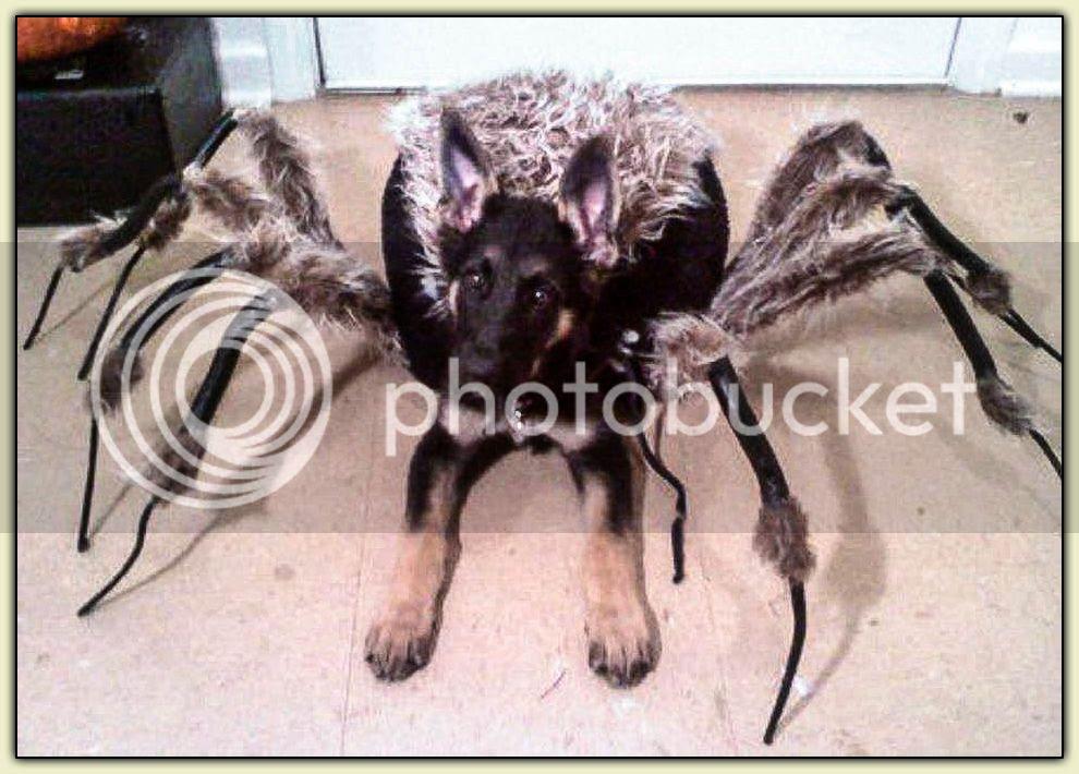 Doggy Tarantula