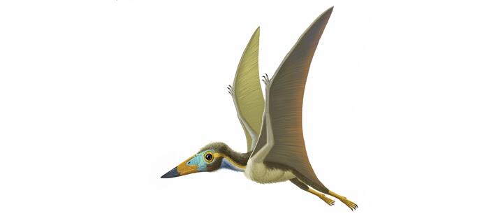 Nemicolopterus 700.309