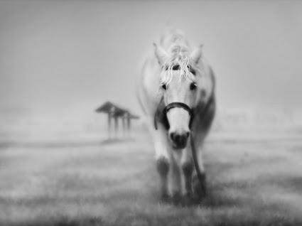 6400 Gambar Wallpaper Hewan Kuda HD