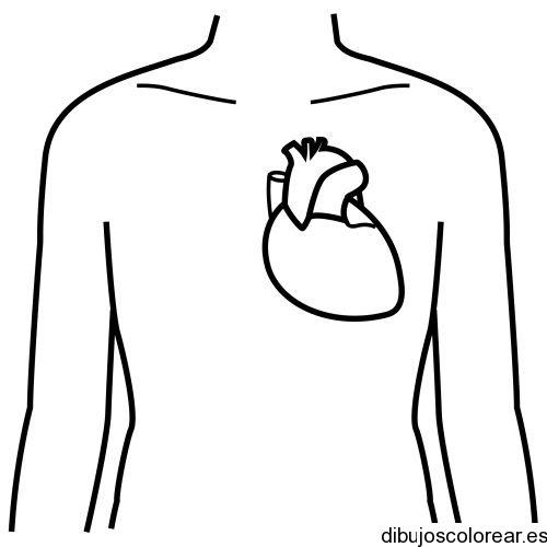 Dibujo De Un Corazón Humano