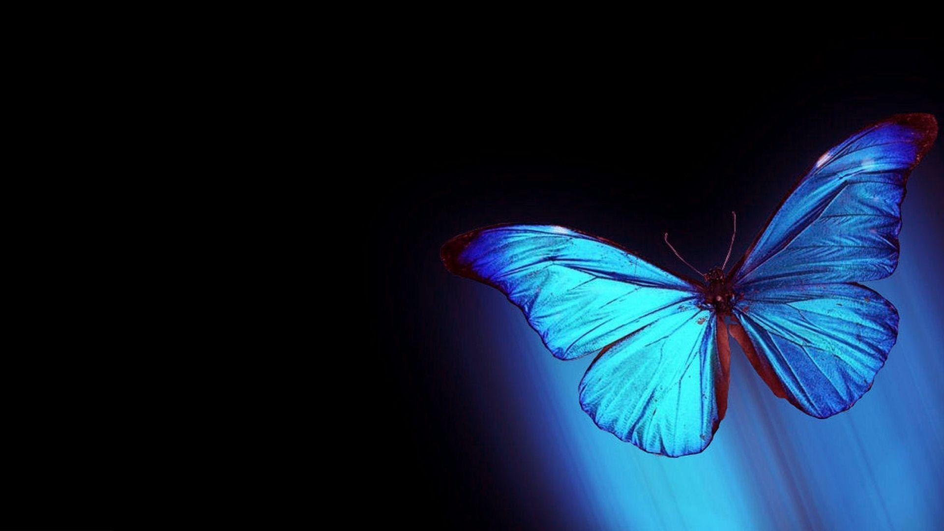 Abstract Butterfly Wallpapers - Wallpaper Cave
