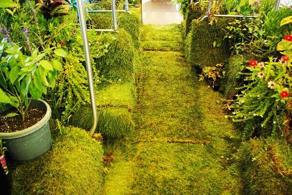 perierga.gr - Ένας καταπράσινος κήπος μέσα στο τρένο!