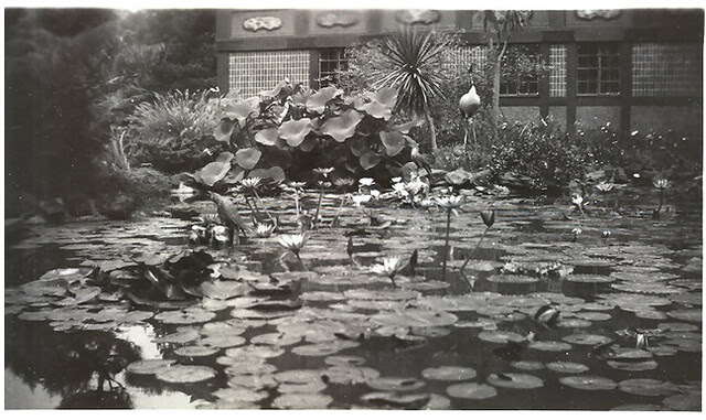 Unknown oriental gardens 4