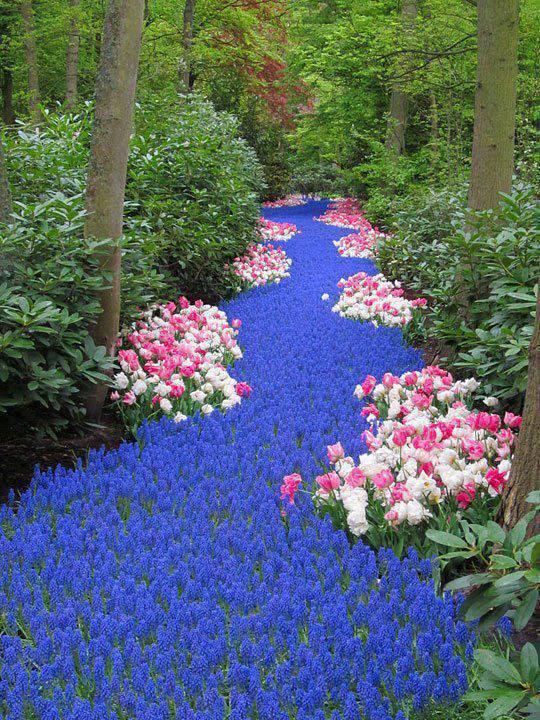 Rio de flores Holanda
