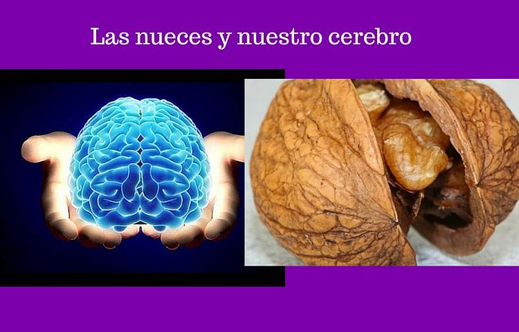 nueces y cerebro