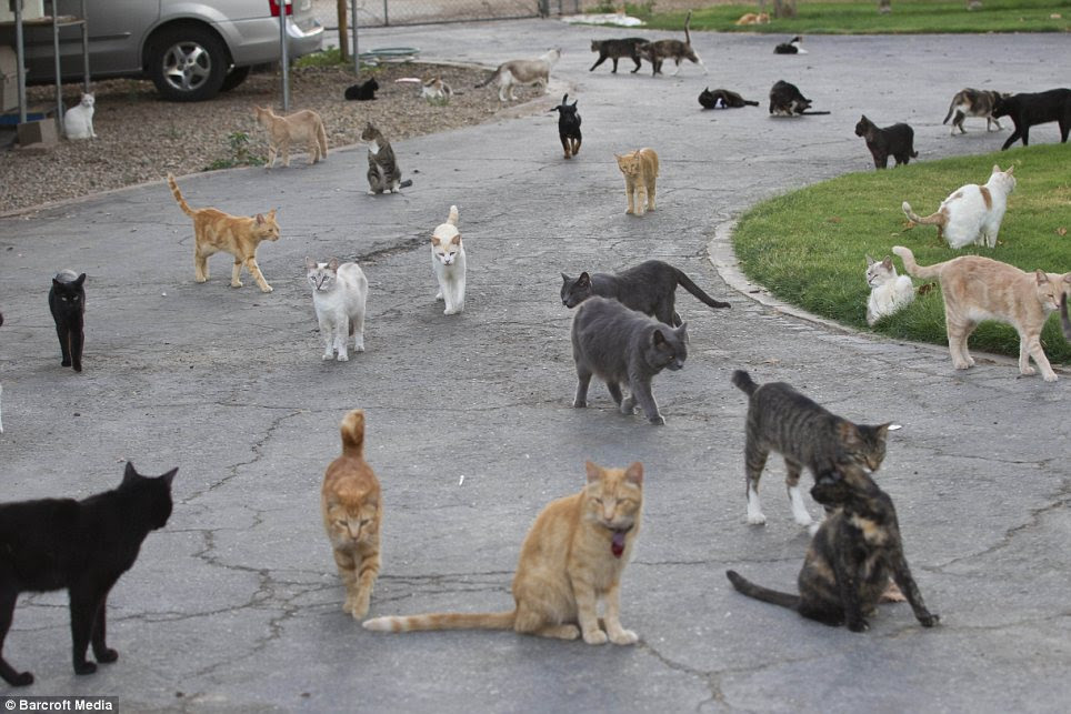 Yard time: Cats of all shapes, colors and sizes make new friends Hundreds of When They arrive on the estate