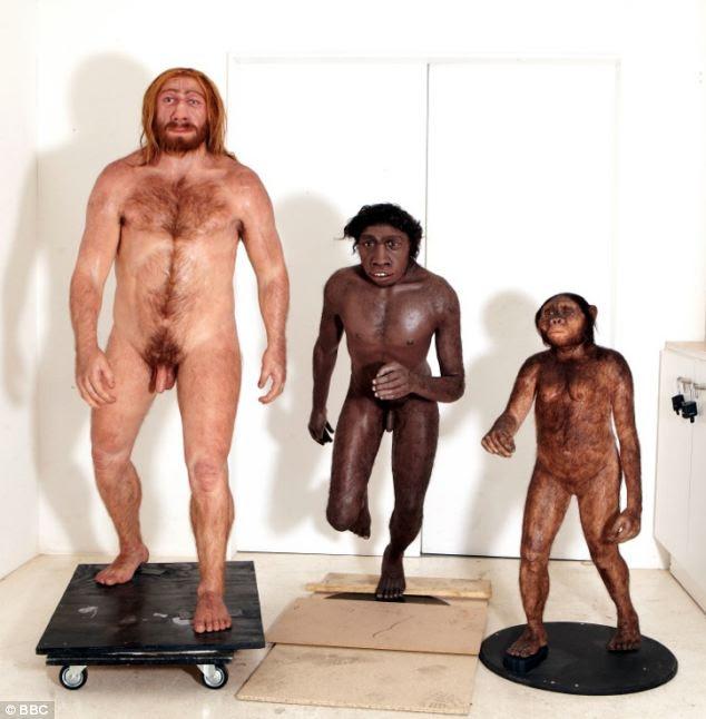 Australopithecus afarensis, Homo Erectus y el hombre de Neanderthal recreada como modelos en 3D de los últimos espectáculo de la BBC, que se emite todas las noches esta semana.