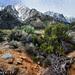 Lone Pine Landscape