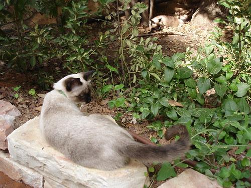 Catschka poses