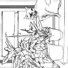 Dibujos Para Colorear Un Gato En La Ventana Eshellokidscom