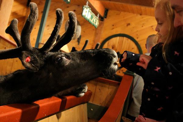 feeding reindeer.jpg