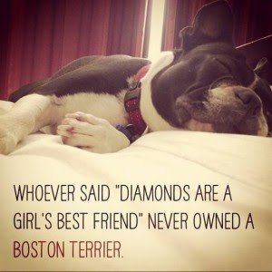 Whoever Said Diamonds Are A Girls Best Friend Never Owned A