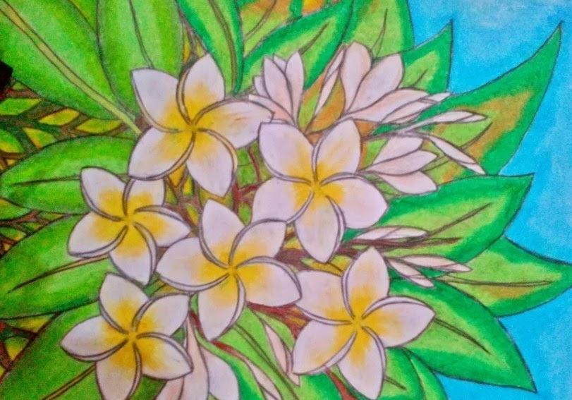 Terpopuler 40 Sketsa Gambar Bunga Kamboja