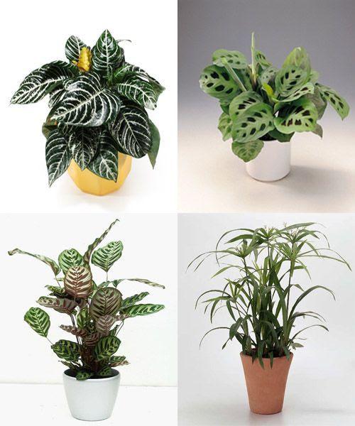 Dormitorio muebles modernos plantas interior poca luz for Plantas de interior que necesitan muy poca luz