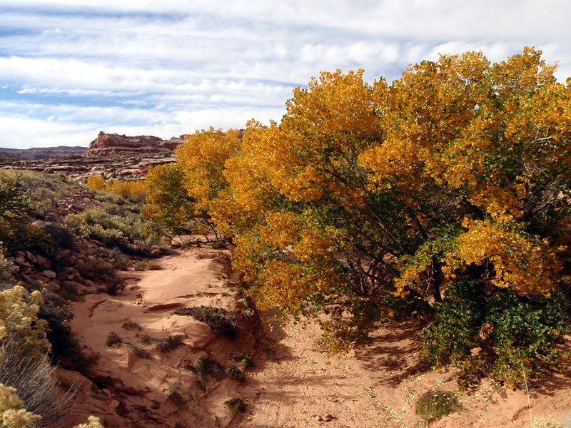 A yellow Autumn drainage between Moab and the Island in the Sky District of Canyonlands National Park.