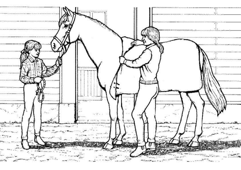 Ausmalbilder Kostenlos Pferde 15 | Ausmalbilder Kostenlos