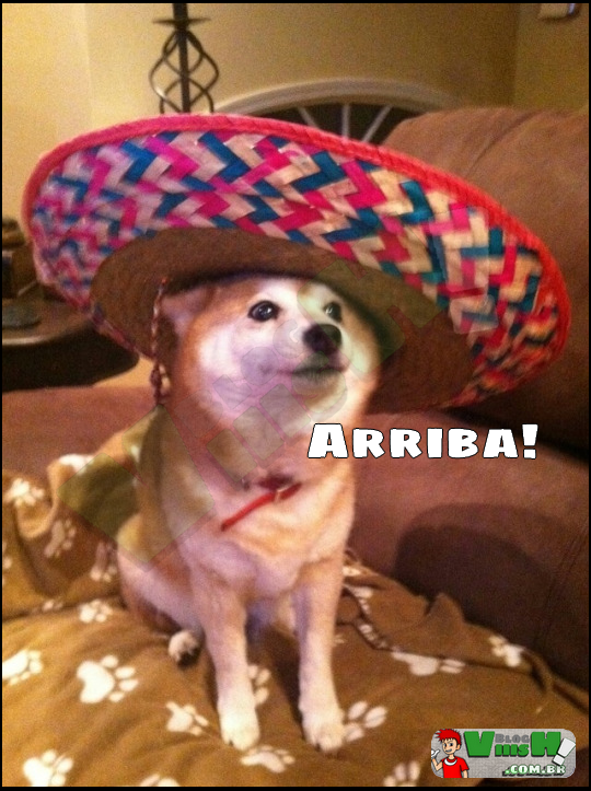 Blog Viiish - Doge mexicano style