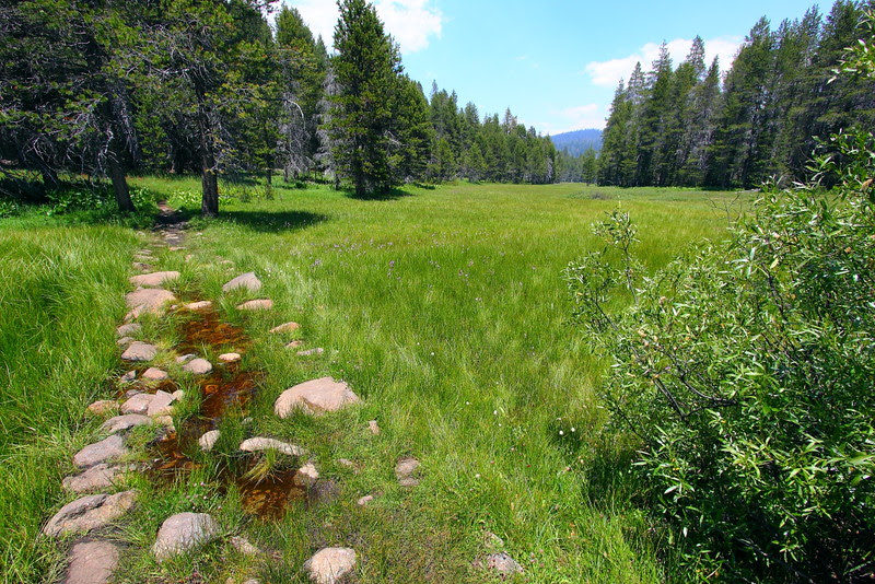 IMG_4438 McGurk Meadow, Yosemite National Park