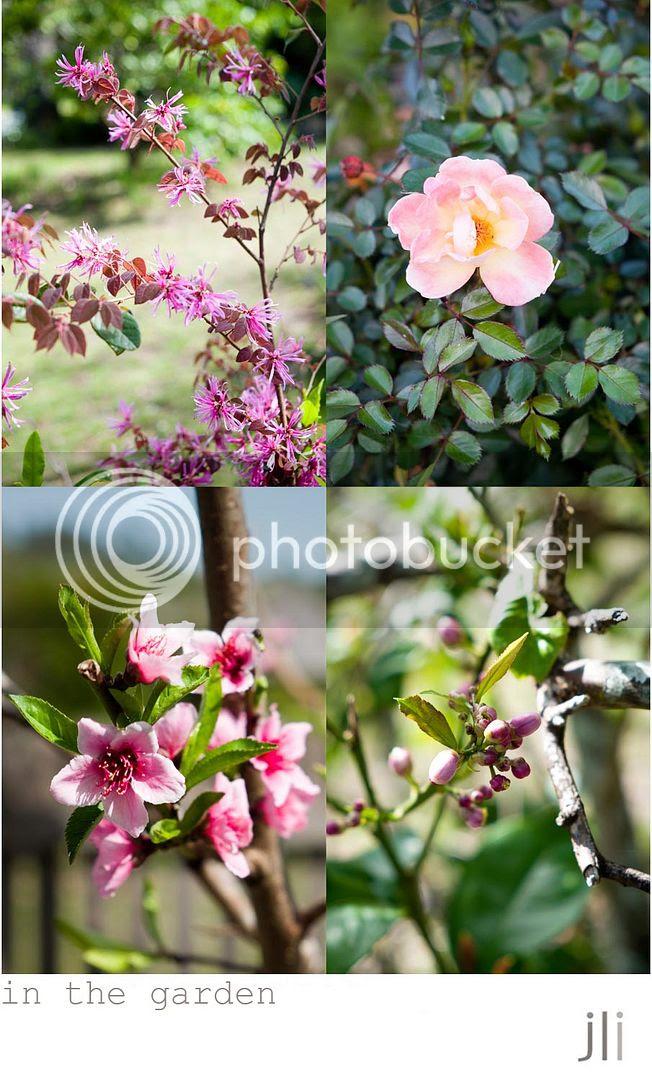 in the garden, dungog photo blog-6_zpsaaab9ab5.jpg