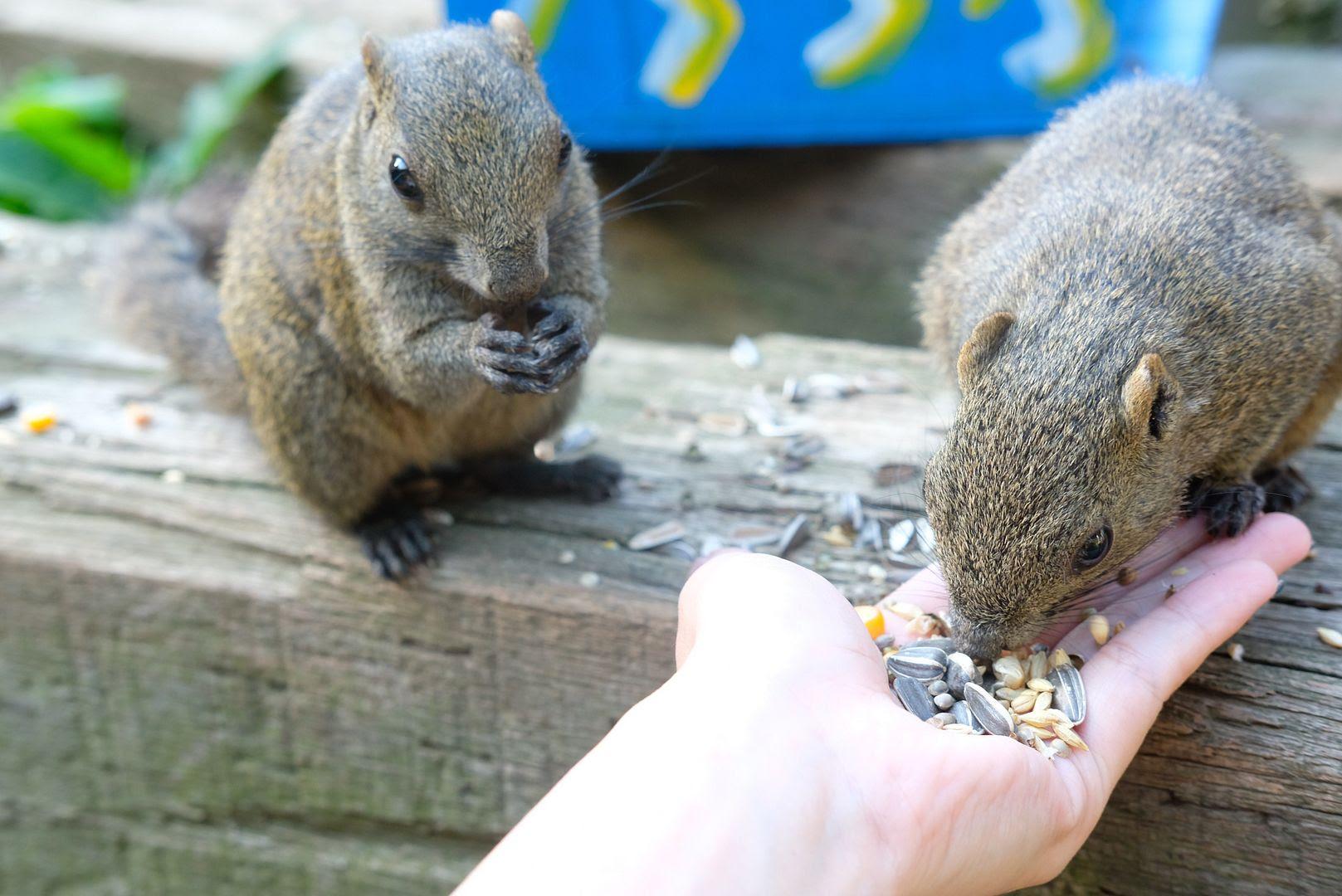 photo Tokyo Machida Squirrel Garden.jpg