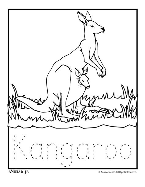 kangaroo coloring page continent box australia zoo