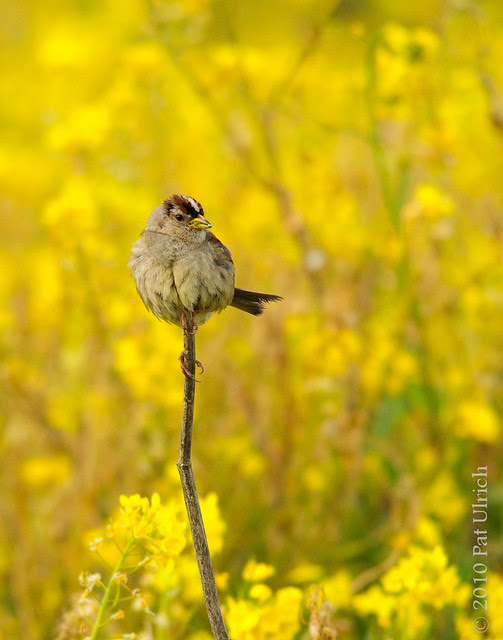 Sparrow on a Stick