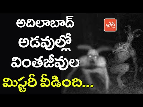 Fact behind mysterious creatures in Adilabad Jannaram Forest.